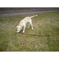 Dog walking location 1