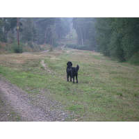 Dog walking location 3